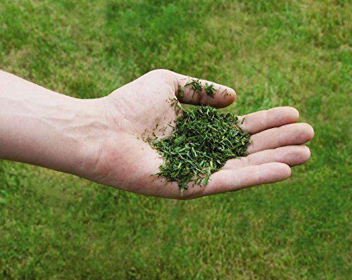 Hand hält gemähten Rasen im Rasenmulch Mäher Test